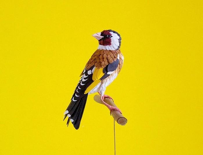 128692234_032316_2137_bird18