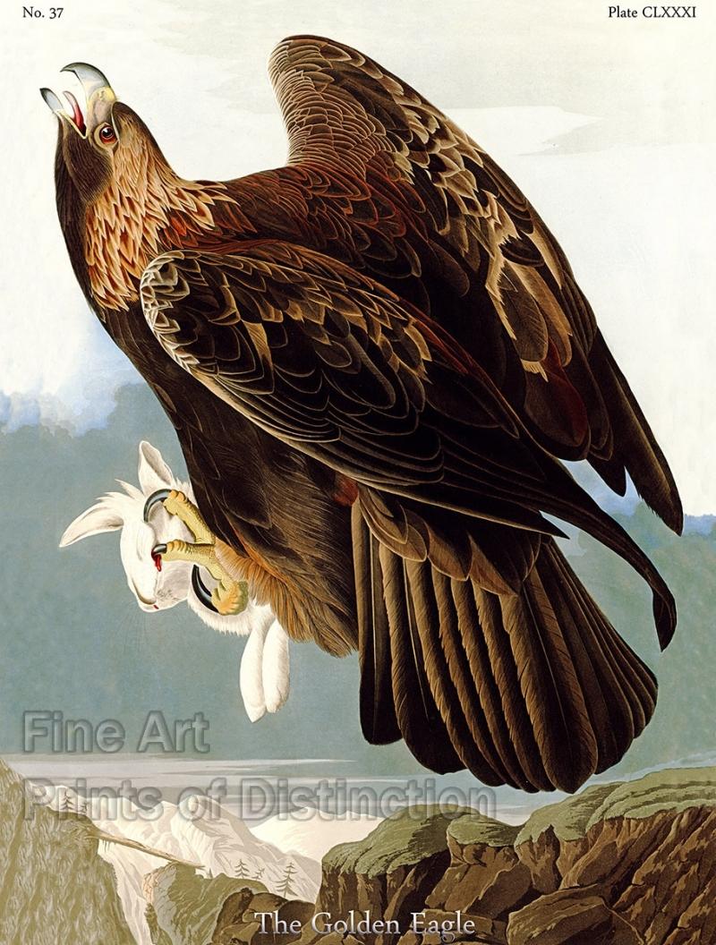 181-audubon-2