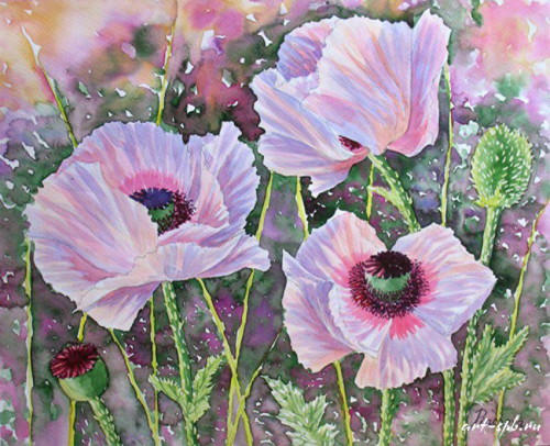 44307303_Pink_Poppies_08