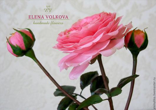 6b373ae6df2ebe6895e30643bbc8-tsvety-floristika-pionovidnaya-roza-iz