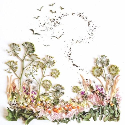 floraforagermeadow