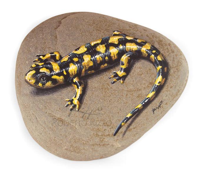 tiger-salamander
